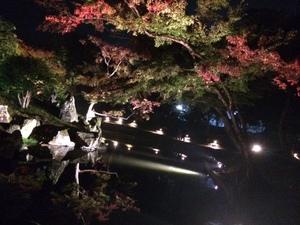 玄宮園ライトアップ4.jpg